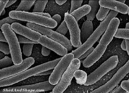 gut bacteria, low carb